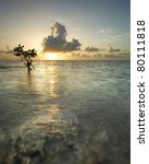Majestic Sunrise With Mangrove...