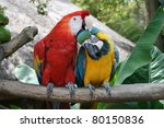 Colourful Macaw  Agapornis...