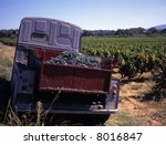Old French truck in vineyard during the harvest - stock photo