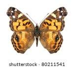Butterfly Vanessa Virginiensis...