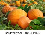 Pumpkin Plants With Rich...