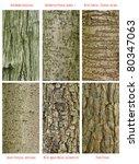 Patterns Set Of  Wild Forest...