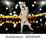 Shiba Inu Dog In Disco Hat...