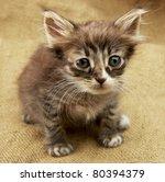 Stock photo little kitten on linen texture 80394379