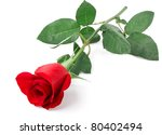 Stock photo branch of red rose isolated on white background 80402494