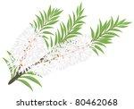 melaleuca   tea tree. vector... | Shutterstock .eps vector #80462068