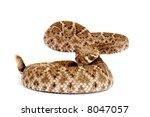 Western Diamondback Rattlesnak...