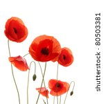 Stock photo poppy flowers isolated on white background 80503381