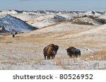Buffalo In Theodore Roosevelt...