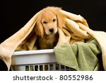 Soft Puppy in a laundry basket full of of towels - stock photo