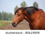 Sad Bay Horse Portrait