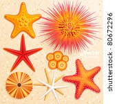 starfish and  sea urchins... | Shutterstock .eps vector #80672296