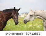 black and white horses | Shutterstock . vector #80712883
