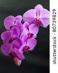 beautiful purple orchid flower... | Shutterstock . vector #80739829