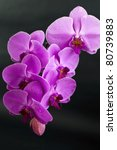 beautiful purple orchid flower... | Shutterstock . vector #80739883