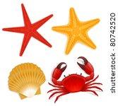 Summer Sea Life Creatures  Star ...