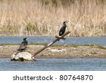 great cormorant on a cross | Shutterstock . vector #80764870