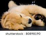 drunk puppy - stock photo