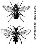 bugs melecta and osmia | Shutterstock .eps vector #80911198