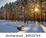 Beautiful Winter Landscape At...