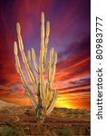 Sunset Background With Cactus