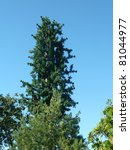 Faux Pine Tree Radio Tower - stock photo
