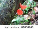 mushroom Tarzetta Rosea Dennis - stock photo