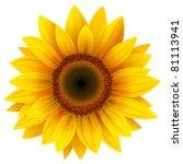 Stock vector vector sunflower 81113941