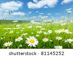 Field Of Summer Flowers