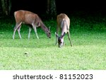Twin Deer on during eating food - stock photo