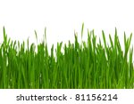 fresh green wheat grass... | Shutterstock . vector #81156214