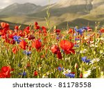 A Field Of Red Poppies And...