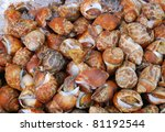 A fresh cockles for sale at a market - stock photo