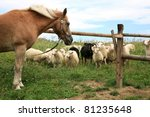 New Haflinger horse on the farm and Skudde sheep it found interesting - the most primitive sheep breed in Europe. Funny farm. - stock photo