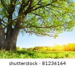 big tree with green leaves on... | Shutterstock . vector #81236164