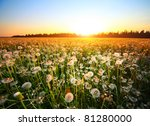 Meadow With Dandelions At...