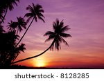 Coconut Palm Trees Silhouetted...