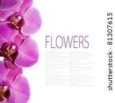 fresh orchids over white... | Shutterstock . vector #81307615