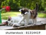 Stock photo small cute kitten and his mother 81314419