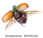 flying insect scarab beetle isolated - stock photo