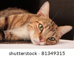 Stock photo cat resting 81349315