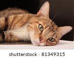 Stock photo cat resting 81349315
