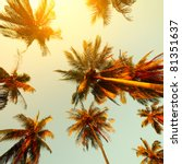 Palm Trees At Sunset Light