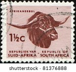 Small photo of SOUTH AFRICA - CIRCA 1961: A stamp printed in South Africa shows Afrikander bull, series, circa 1961