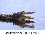 Alligator In The Wild At Upper...