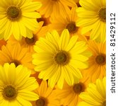 Yellow Daisy Flower Background...