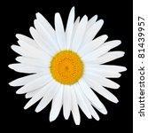 White Chamomile Daisy Flower...