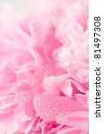 Stock photo abstract pink peony flower background 81497308
