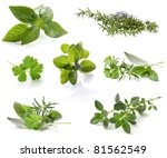 collection of fresh herbs ... | Shutterstock . vector #81562549