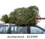 Huge Christmas tree tied to the roof on a minivan - stock photo